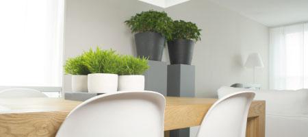 Como atraer energia positiva en su hogar